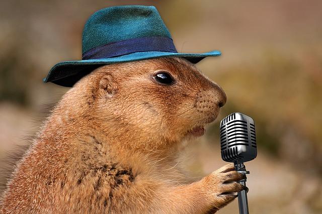 Sincap ve mikrofon